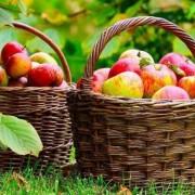 EXCLUSIV În România nu există culturi de fructe bio în afară de fructe de pădure sau cătină. Cele aduse din import ascund un secret sumbru!