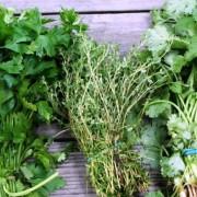 Plante aromatice proaspete sau uscate. Cum e cel mai indicat să le consumăm? Răspunsul este surprinzător