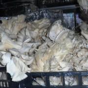 Un client acuză: ciuperci Pleurotus din Ungaria vândute la standul cu produse românești din Kaufland Mărăști din Cluj