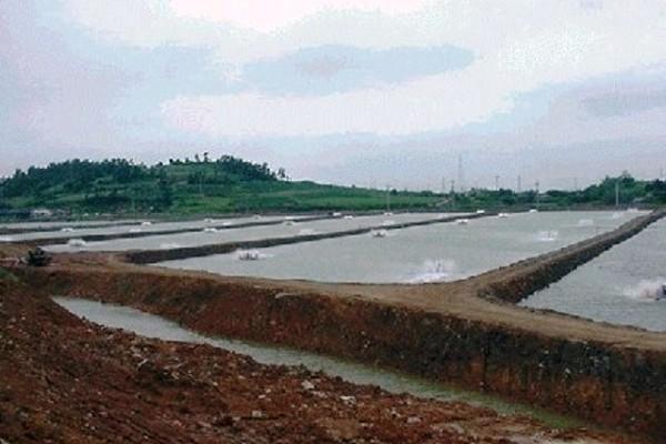 Bazine pentru acvacultura de creveți în Coreea de Sud
