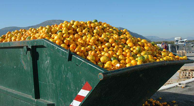 fructe gunoi