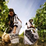 Toamna aceasta, fă-ți vinul de casă cu must din Ardeal! Vezi cât costă și cum poți comanda!