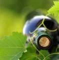 În ce condiții trebuie păstrat vinul de casă