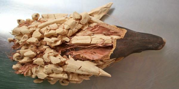 Fructul de baobab, un nou super-aliment?