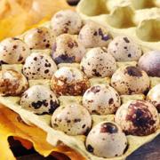 Cura cu ouă de prepeliţă- de ce este indicat să consumaţi ouă de prepeliţă