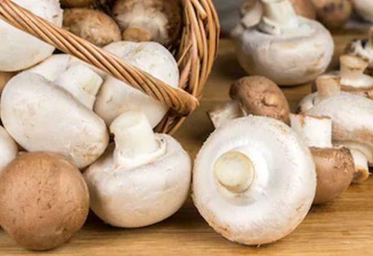 Ciuperci champignon albe si maro
